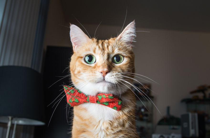 gatos-mostrando-emociones (6)
