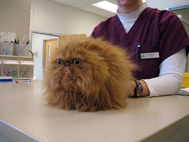 gatos-visitando-veterinario (1)
