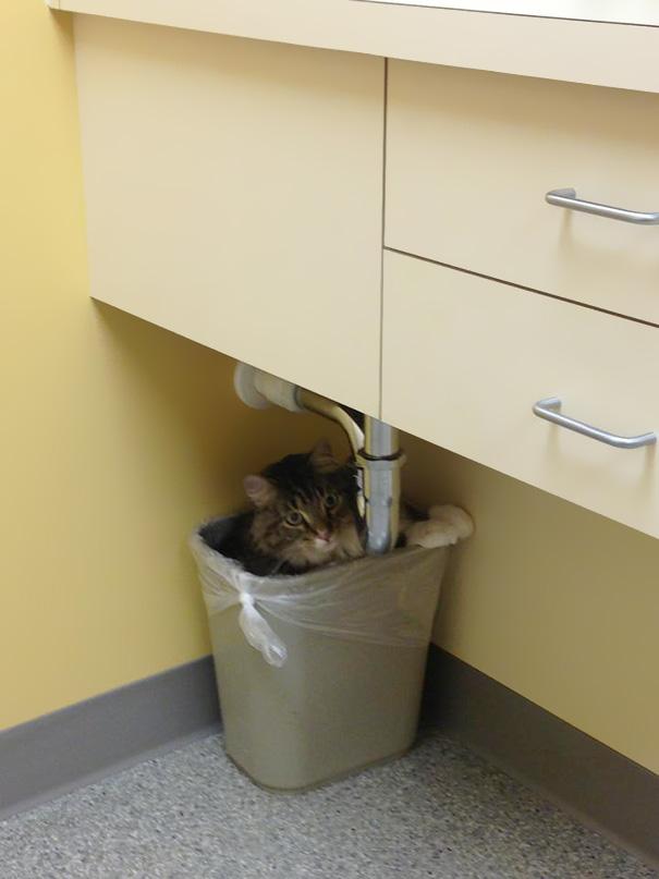 gatos-visitando-veterinario (15)