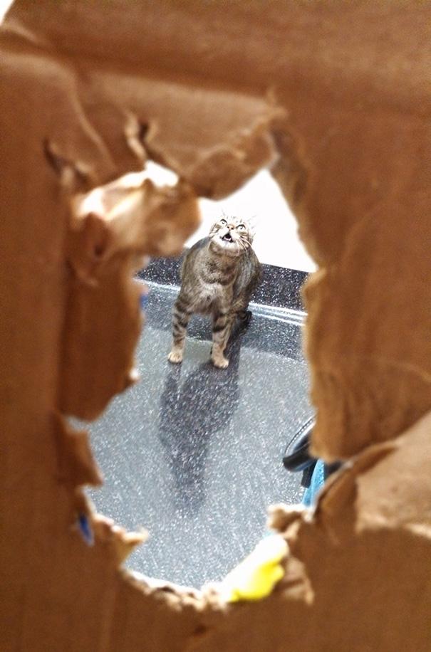 gatos-visitando-veterinario (2)