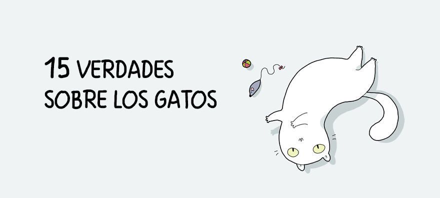 guia-ilustrada-verdades-gatos-1