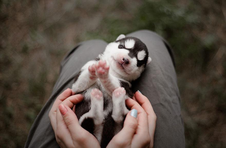 instagram-perros-husky-siberiano-erica-tcogoeva (9)