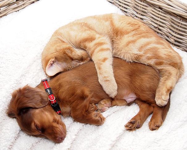 amistad-perros-gatos (16)