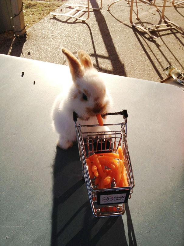 dia-internacional-conejos (6)