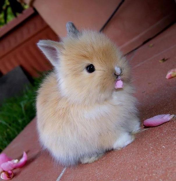 dia-internacional-conejos (8)
