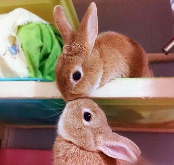 dia-internacional-conejos (9)