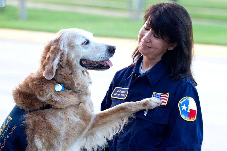 perro-rescate-11s-superviviente-16-cumpleanos-bretagne (1)