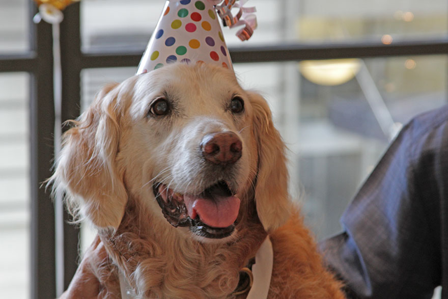 perro-rescate-11s-superviviente-16-cumpleanos-bretagne (3)