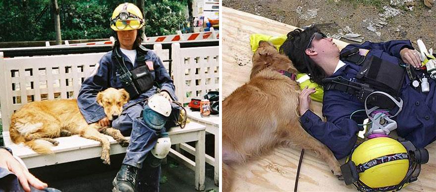 perro-rescate-11s-superviviente-16-cumpleanos-bretagne (4)