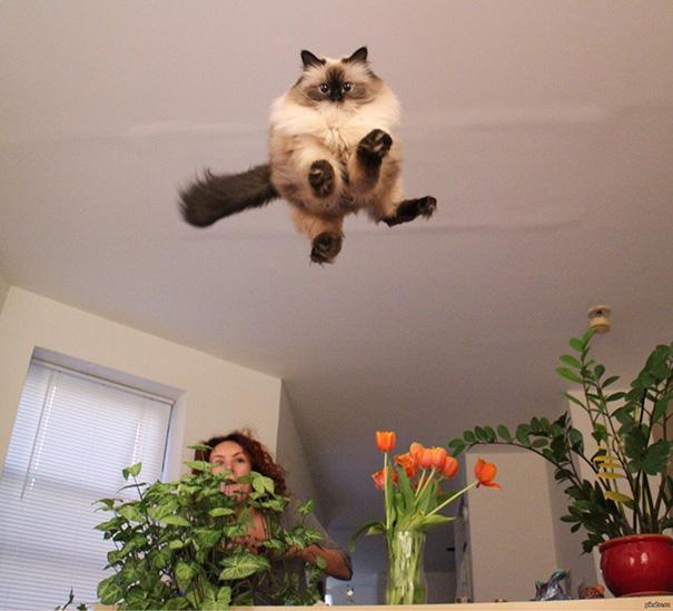 fotos-gatos-momento-justo (7)