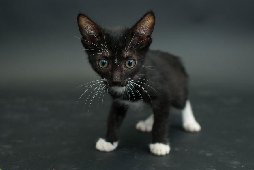 fotos-gatos-negros-adopcion (12)