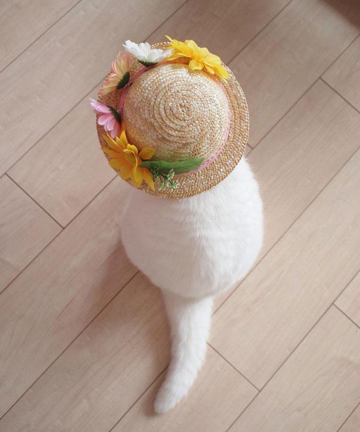 gato-anciano-disfrazado-ura-japon (7)