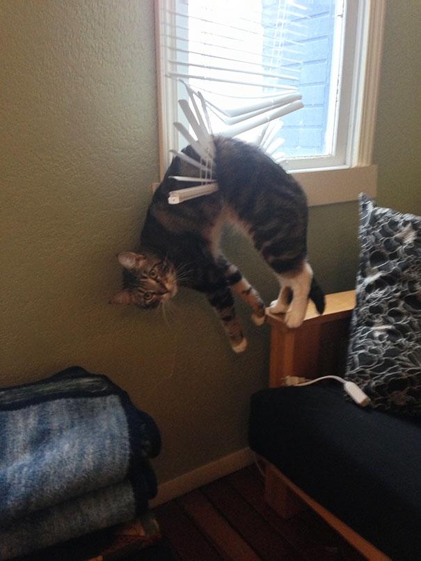 gatos-cometiendo-errores (15)
