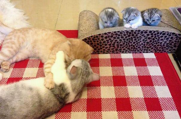 orgullosas-mamas-gato (3)