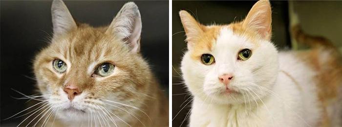 gatos-ancianos-max-mojo-adoptados-maryland (2)