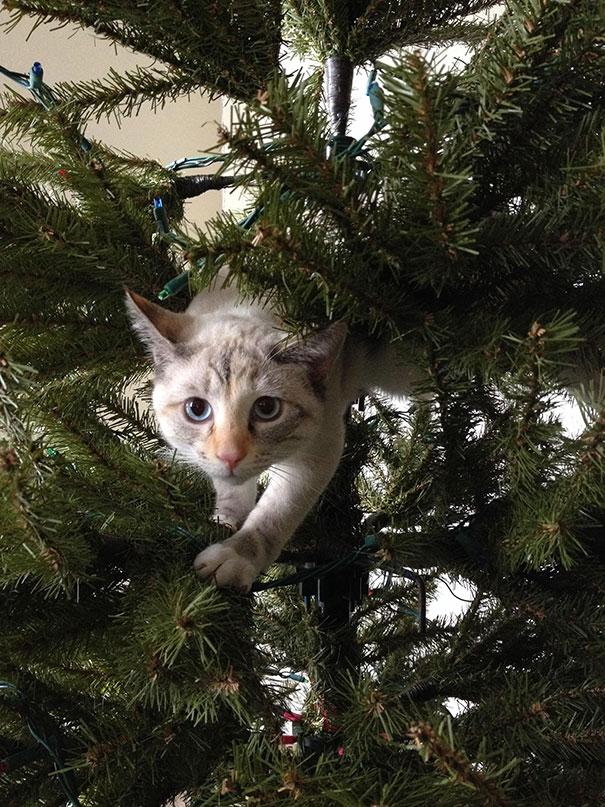 gatos-decorando-destruyendo-arbol-navidad (4)