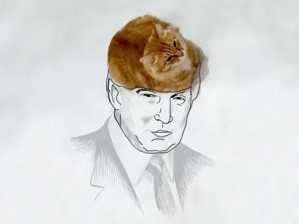 meme-foto-gato-dibujos-divertidos (6)