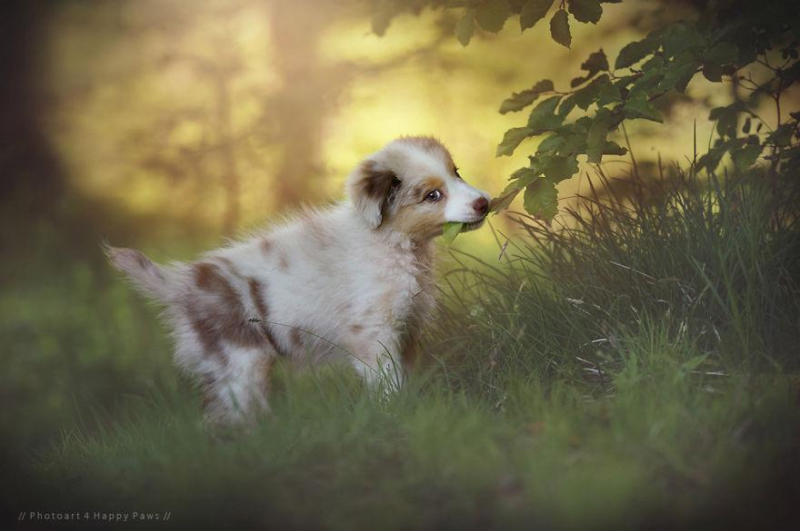 retratos-perros-naturaleza-anne-geier (11)