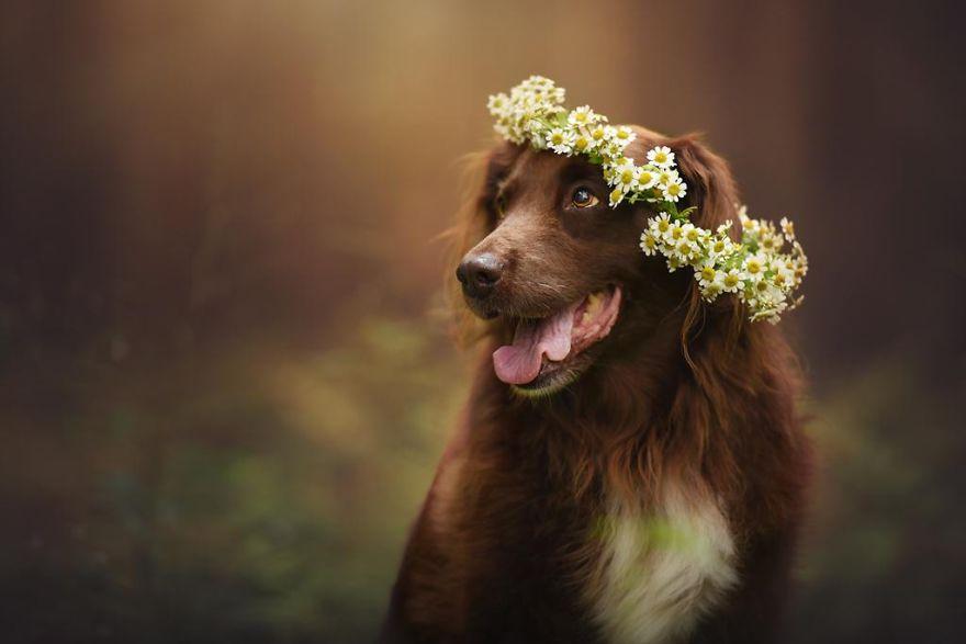 retratos-perros-naturaleza-anne-geier (19)