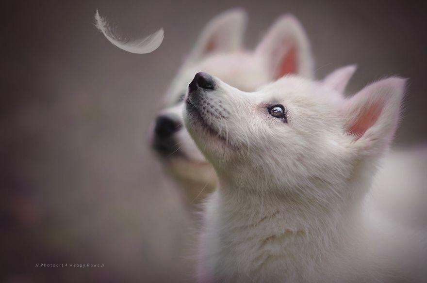 retratos-perros-naturaleza-anne-geier (2)