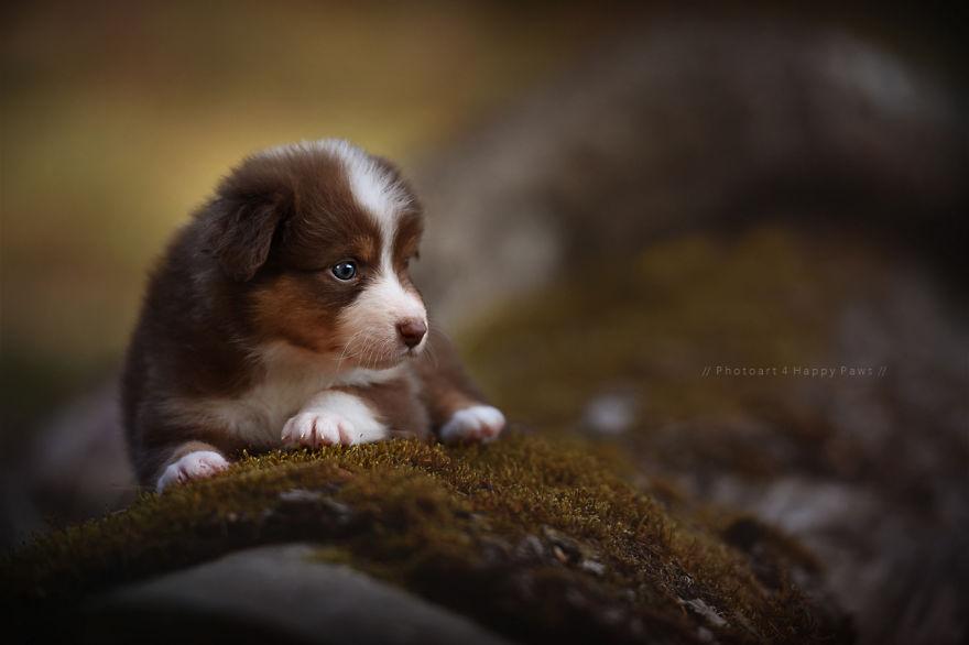 retratos-perros-naturaleza-anne-geier (23)
