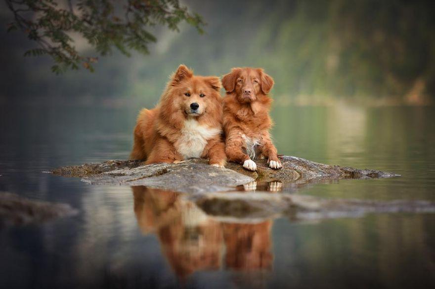 retratos-perros-naturaleza-anne-geier (25)