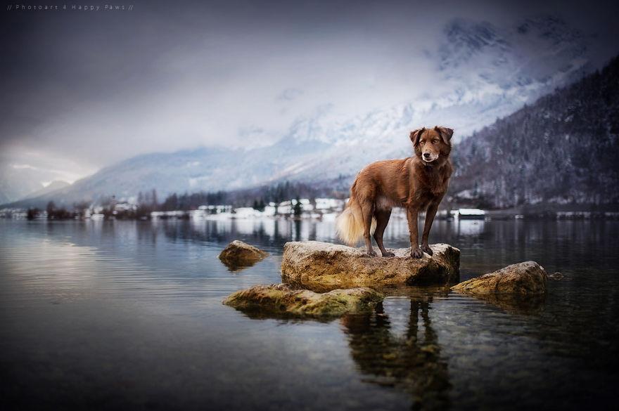 retratos-perros-naturaleza-anne-geier (5)
