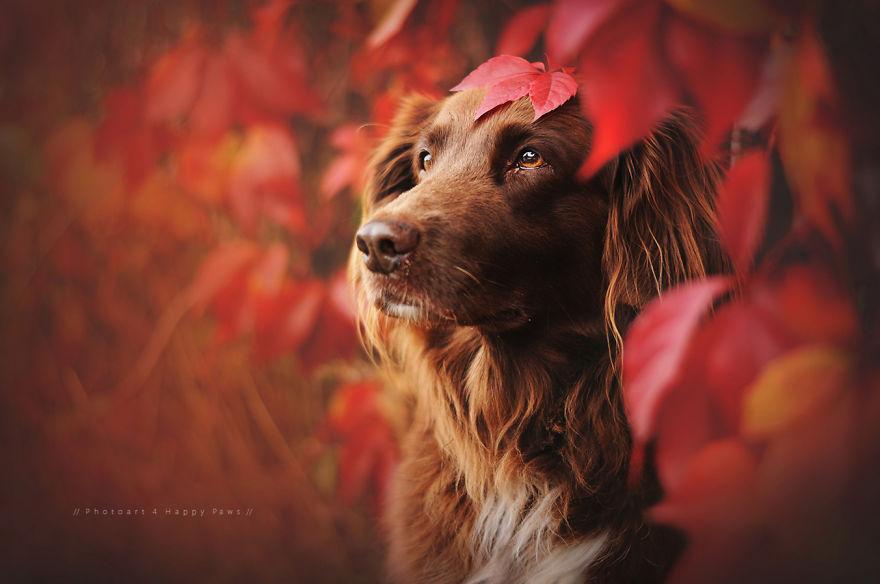 retratos-perros-naturaleza-anne-geier (8)