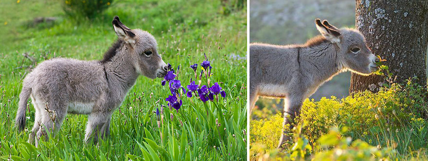 animales-oliendo-flores (1)