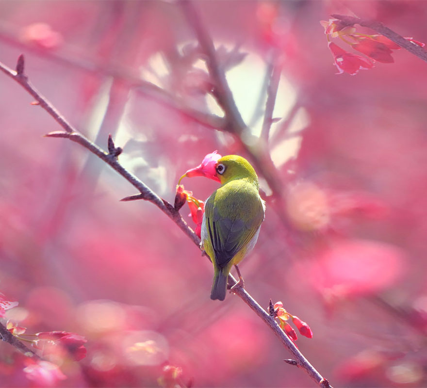 animales-oliendo-flores (13)