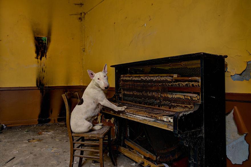 exploracion-lugares-abandonados-perro-claire-alice-van-kempen (11)