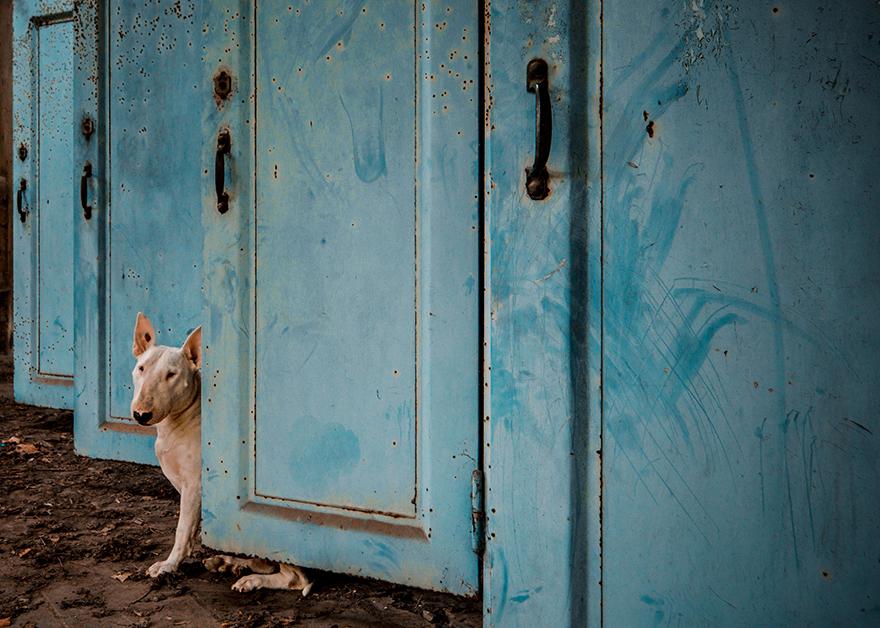 exploracion-lugares-abandonados-perro-claire-alice-van-kempen (4)