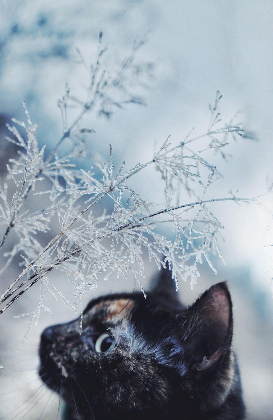fotos-gato-estaciones (2)