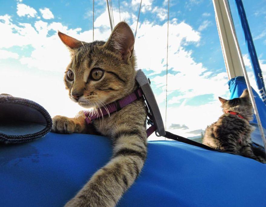 gatos-abandonados-aventureros-bolt-keel (6)