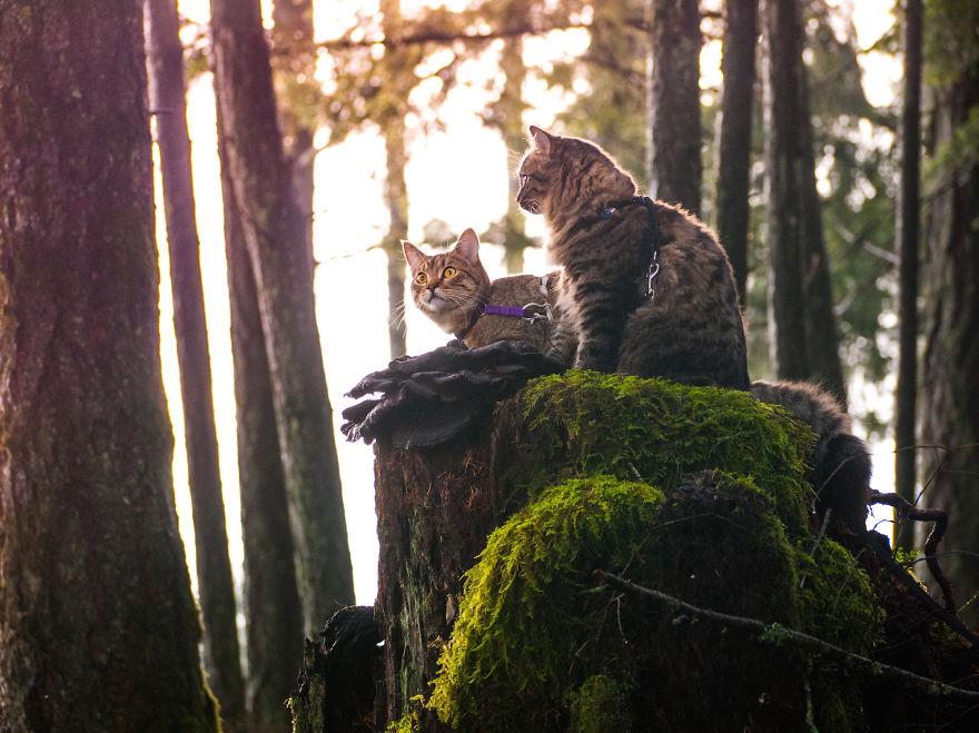 gatos-abandonados-aventureros-bolt-keel (7)