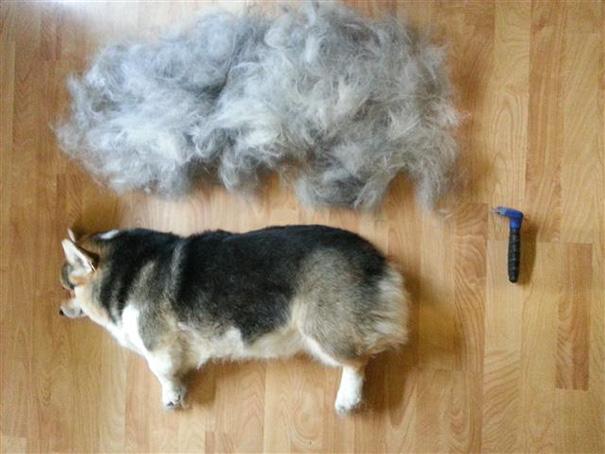mascotas-soltando-pelo (35)