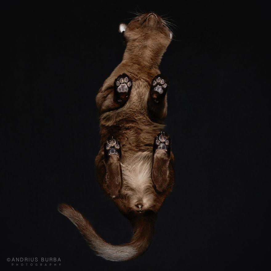 under-cats-fotos-gatos-debajo-andrius-burba (3)