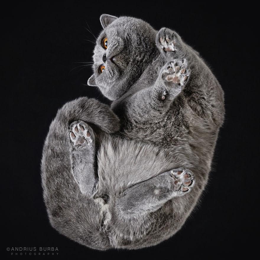 under-cats-fotos-gatos-debajo-andrius-burba (6)