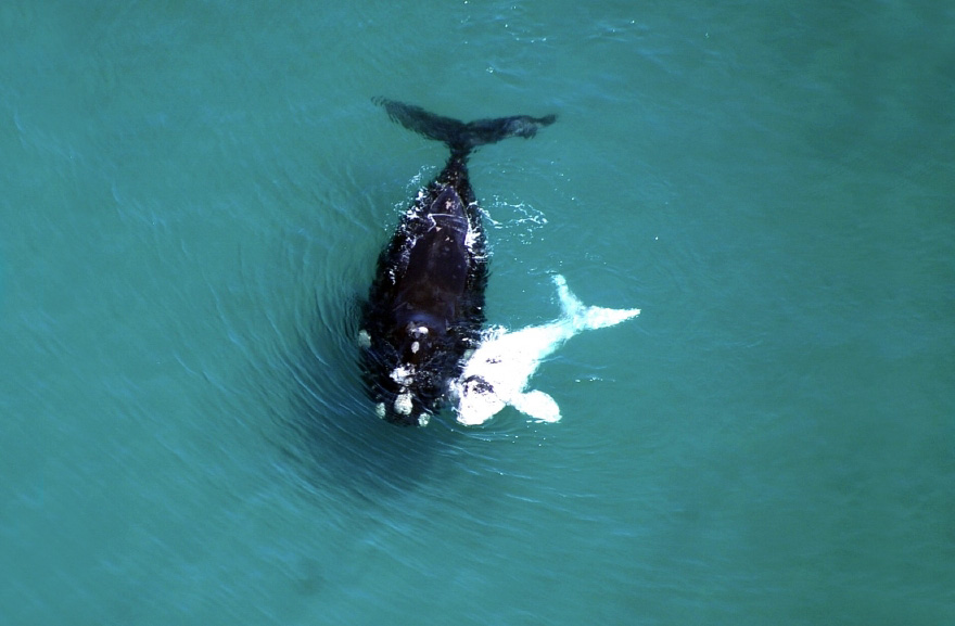 dia-mundial-ballenas (10)