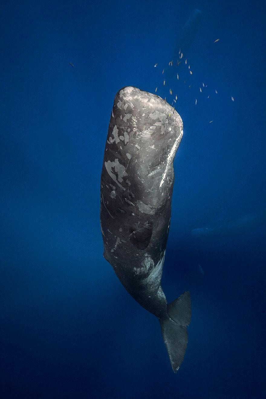 dia-mundial-ballenas (34)