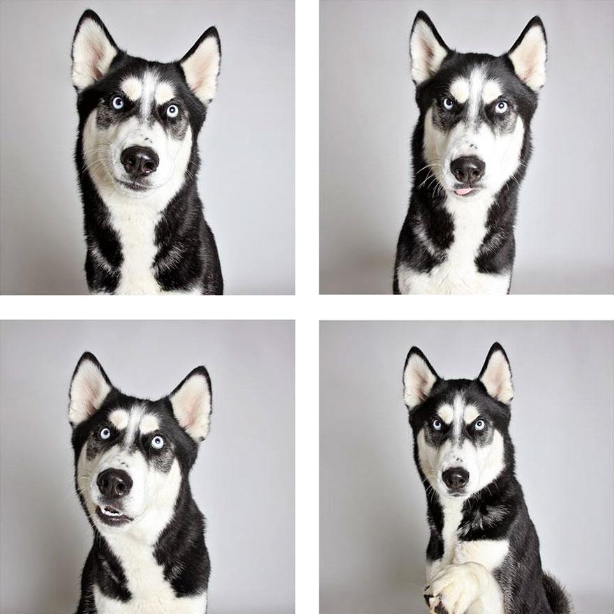 fotomaton-adopcion-perros-organizacion-humanitaria-utah-2 (1)