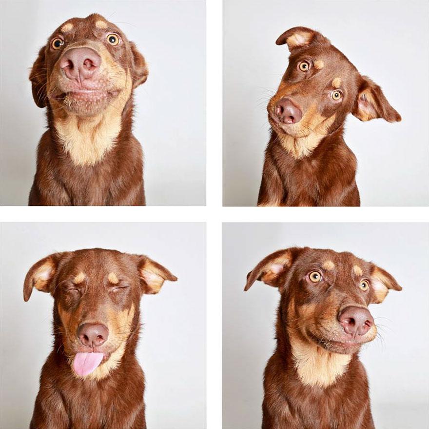 fotomaton-adopcion-perros-organizacion-humanitaria-utah-2 (8)