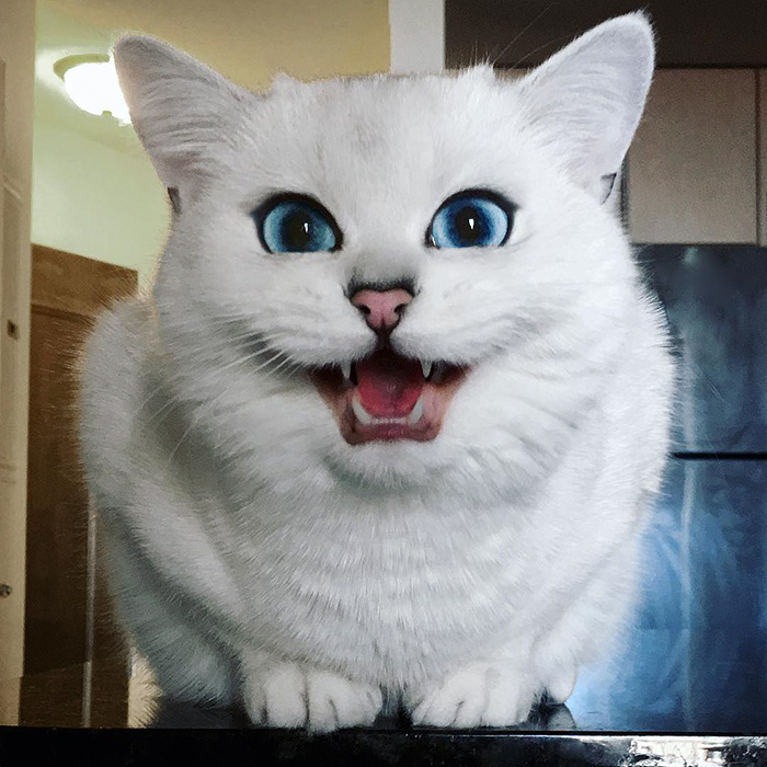 ojos-bonitos-gato-pelicorto-ingles-coby (1)