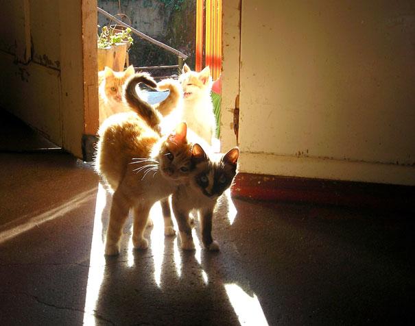 parejas-gatos-san-valentin (14)
