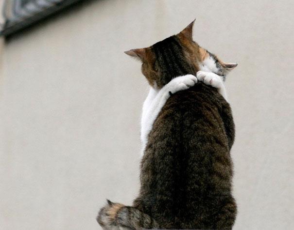 parejas-gatos-san-valentin (5)