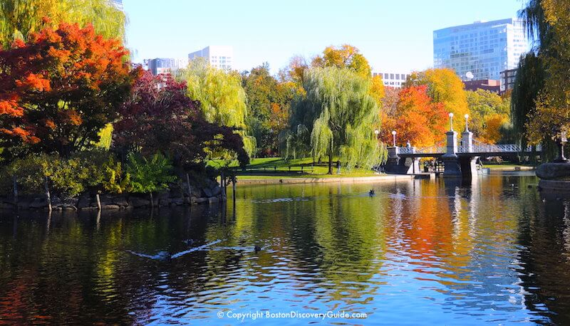 Autumn Leaf Fall Wallpaper Boston Fall Foliage Tours 7 Best Sites In The City