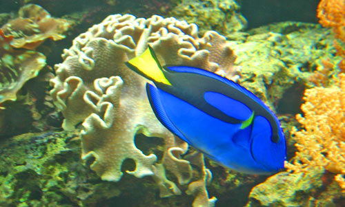 Tropical fish types fish breeds for your aquarium adds Types of fish aquarium