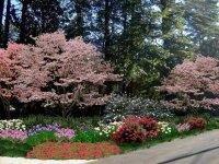 2 Landscaping: Yard Landscaping Ideas Georgia
