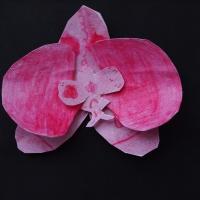 Orquideas recortables