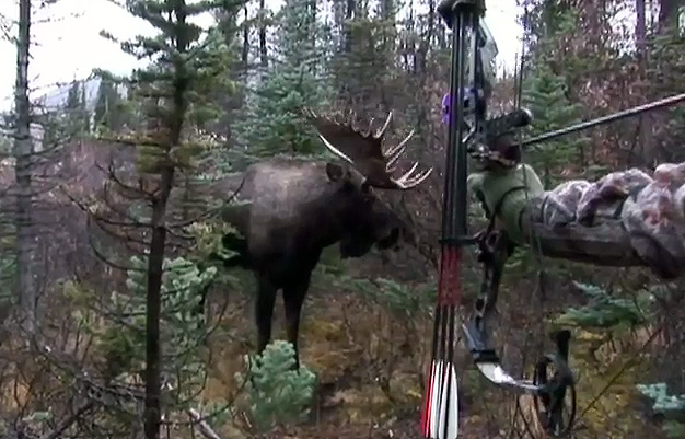 Image For Image For Moose Hunting In Newfoundland